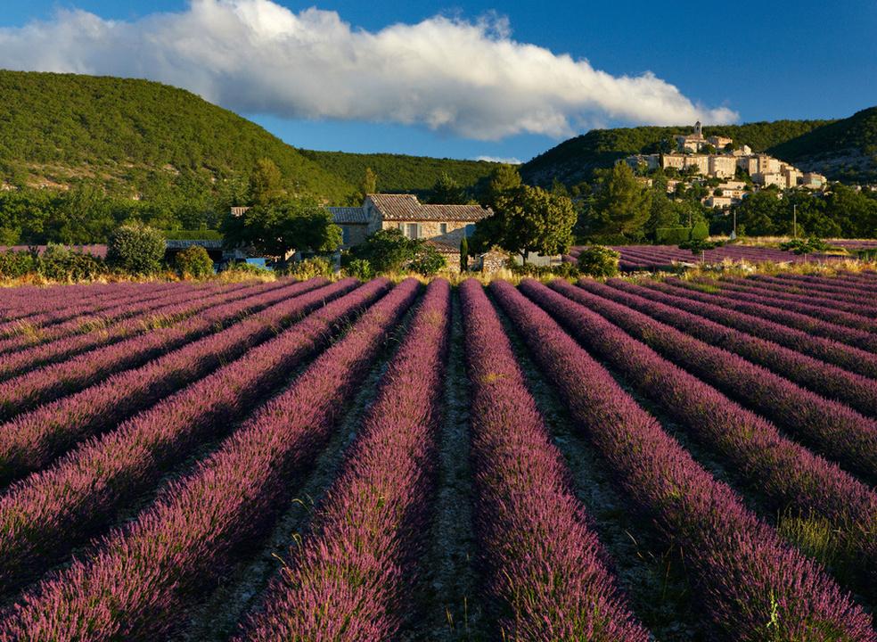 Prepare-se para uma explosão primaveril: 20 campos de flores que nos fazem querer viajar até lá