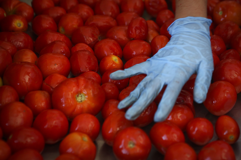 1,4 milhões de toneladas. INE diz que este ano a produção de tomate deverá ser das melhores de sempre