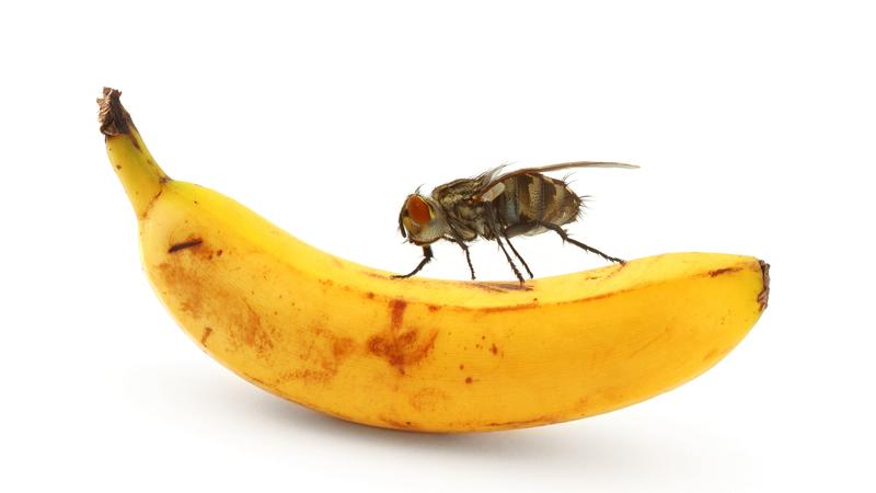 Uma mosca caiu-lhe na comida? Deite-a fora
