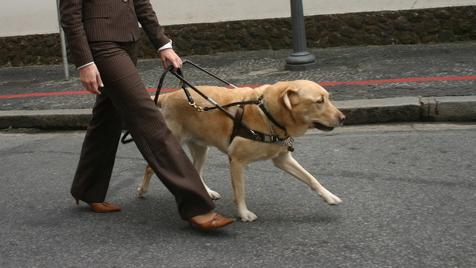 A menina, o cão, a cegueira...