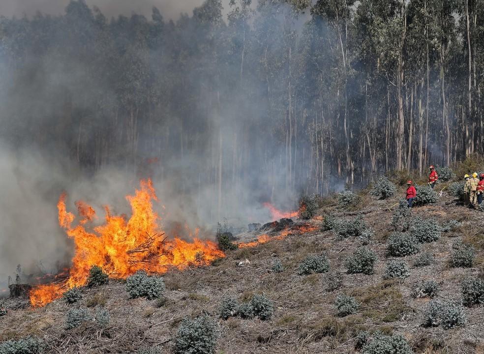 Centenas de operacionais combatem vários incêndios. Há quatro bombeiros feridos