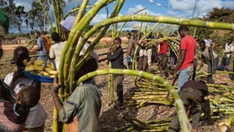 Porque estão as grandes empresas a apropriar-se de terras no continente com mais carências alimentares?