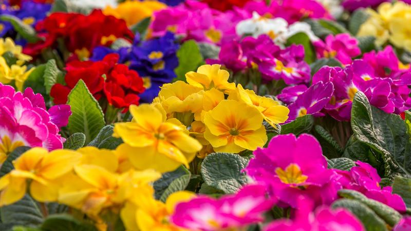 Dê (ainda) mais cor ao seu jardim na primavera. As espécies e as tarefas essenciais
