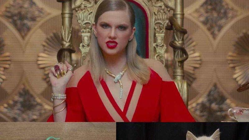 Gatos vestidos de Taylor Swift? A ideia está a fazer sucesso na Internet
