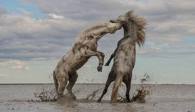 Estas fotografias premiadas mostram a Natureza em todo o seu esplendor