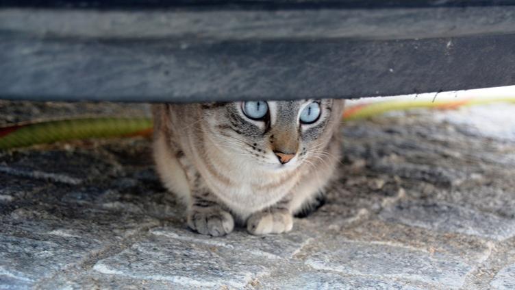Gatos errantes: os pequenos selvagens que se alastram na urbe
