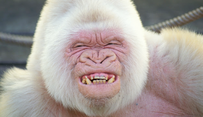 Encontre aqui os animais mais engraçados