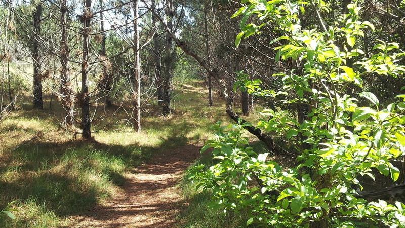 """Associação diz máquina do Estado """"não deixa fazer melhor"""" na recuperação da floresta"""