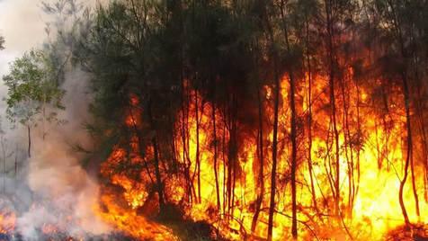 """""""E quem apaga o fogo? E como se recuperam aquelas terras? E o planeta?"""""""