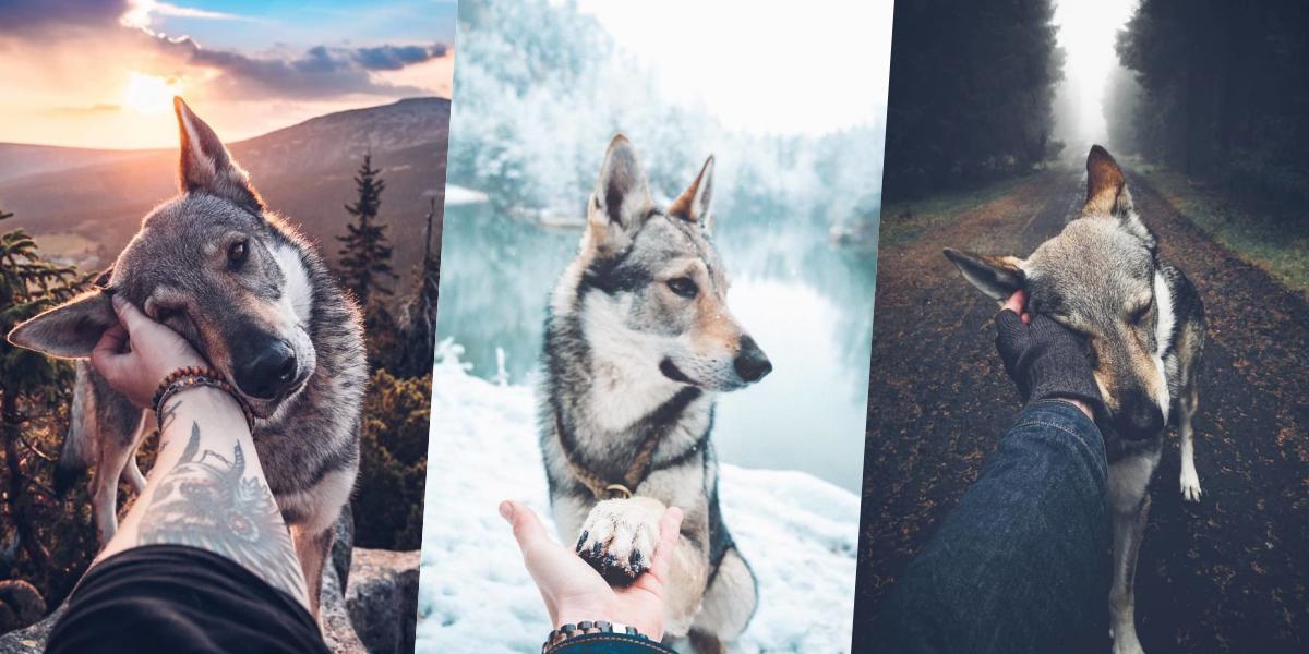 Cansado das fotos de casais no Instagram? Esta versão com um cão e o seu dono na natureza é muito melhor