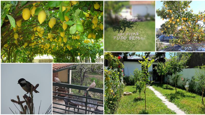O que vejo da minha janela? Entre limoeiros, pássaros e bonitos jardins, as vossas vistas continuam a surpreender-nos