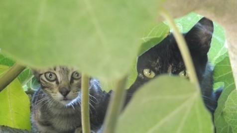 Vida Selvagem no quintal: nova geração