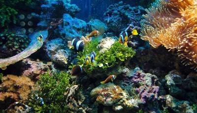 Conheça os maiores recifes de coral do mundo