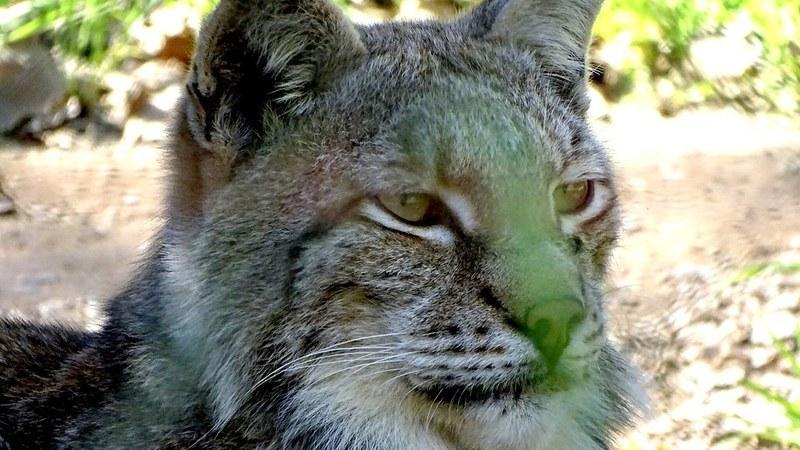 Parque Biológico da Serra da Lousã: um lugar para descobrir a vida selvagem de Portugal