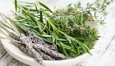Natureza terapêutica: 15 plantas que vão melhorar a sua vida