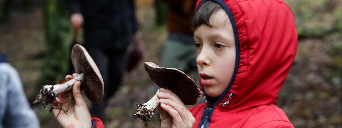 """Viagem ao """"reino fungi"""". Turistas partem à descoberta de cogumelos na Serra da Lousã"""