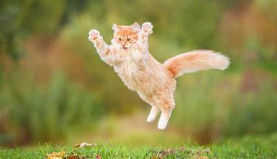 15 coisas que ainda não sabe sobre gatos