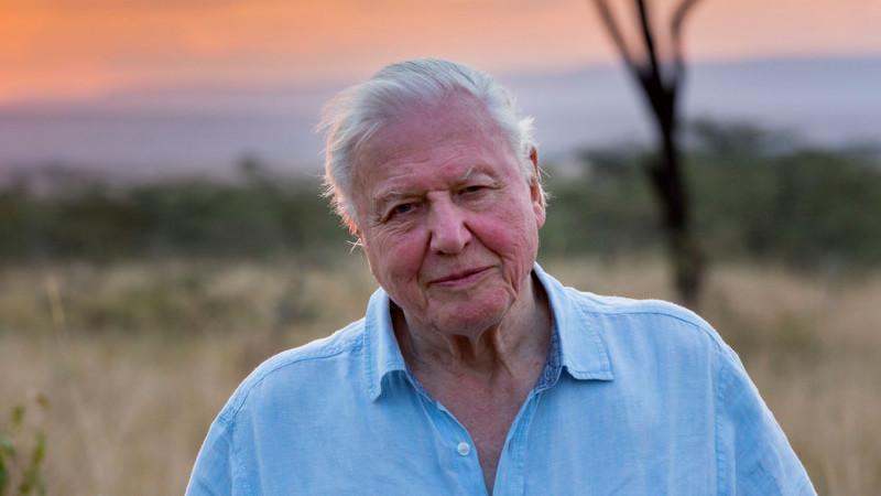 """As primeiras aventuras de David Attenborough contadas no livro """"Aventuras de um Jovem Naturalista"""""""