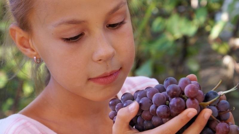 No Porto, produtores vinícolas vão estar à prova por uma causa, apoiar as crianças e jovens do Douro