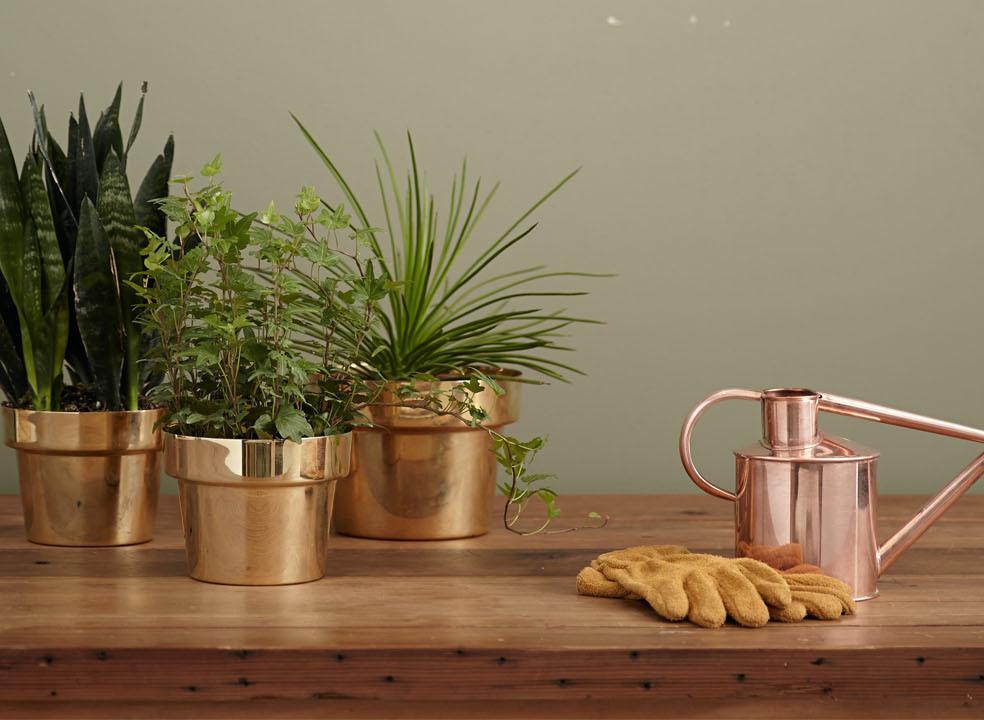 Quatro plantas que vão dar energia à sua casa