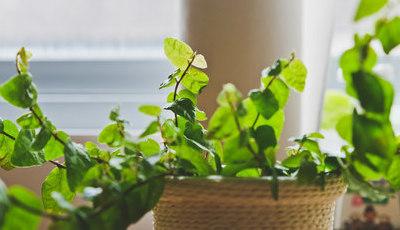 10 plantas que criam um microclima perfeito em casa