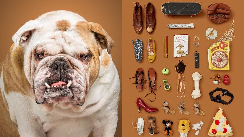 """Do """"Neurótico"""" à """"Princesa"""" e à """"Sénior"""", a vida dos cães também se conta nos seus objetos"""