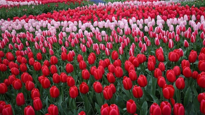 Celebre a primavera e visite jardins de todo o mundo sem sair de casa
