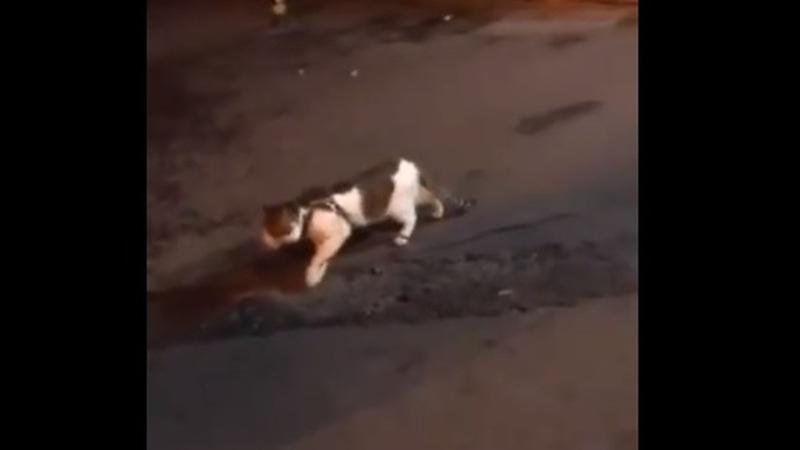 Dois gatos iam lutar, mas o cão intrometeu-se e é o novo herói do Twitter