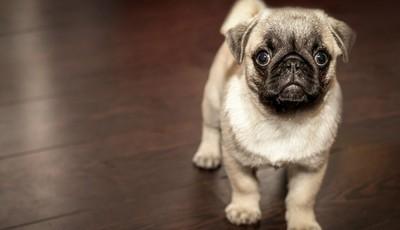 O que lhe está a dizer o seu cão? Saiba interpretar algumas expressões
