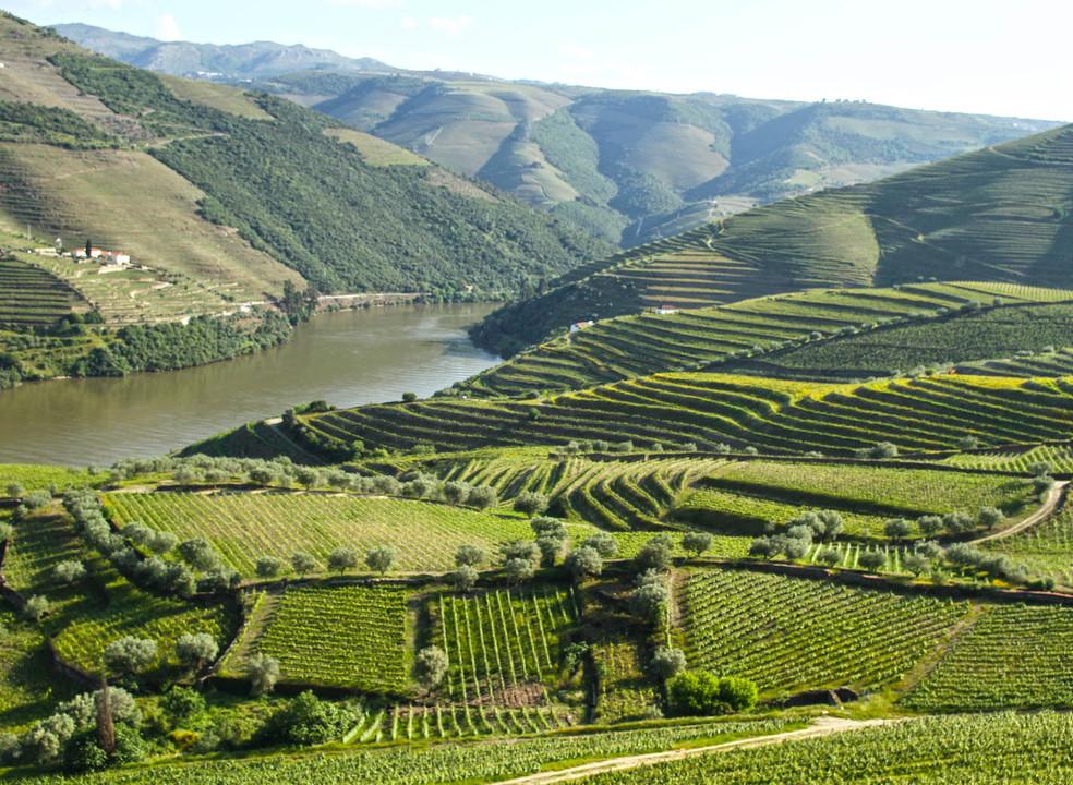 Aperte o cinto: vamos numa viagem pelo enoturismo no Douro