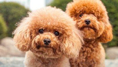 Estas são as 10 raças mais inteligentes de cães