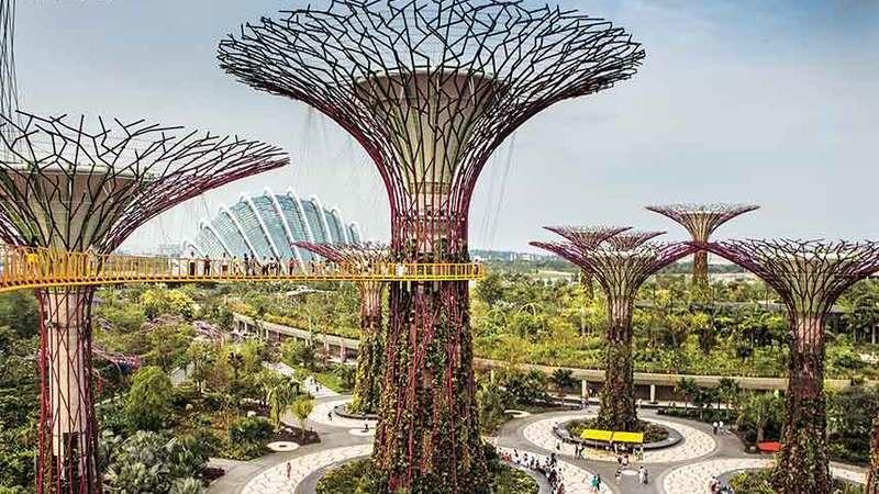 Árvores ecológicas