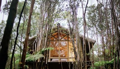 Esta casa na árvore no meio de uma floresta é um dos alojamentos Airbnb mais desejados do mundo