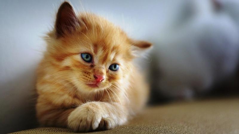 """Serão os gatos um bicho assim tão fofo? Na Austrália são """"um problema"""""""
