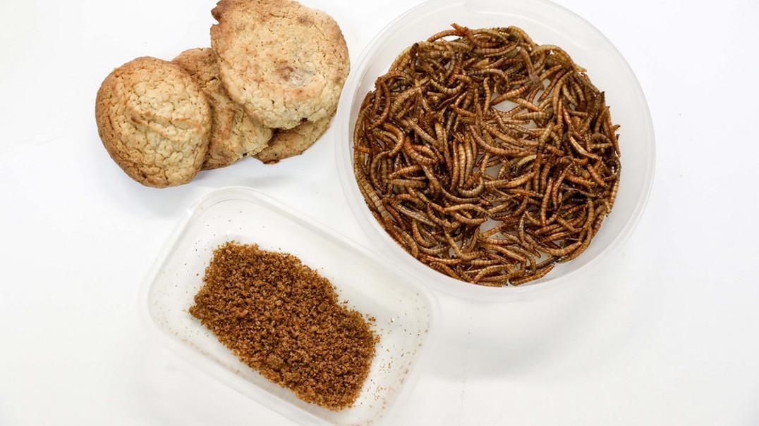 A semana que passou: O futuro já chegou: há uma portuguesa em Londres a imprimir comida com insetos