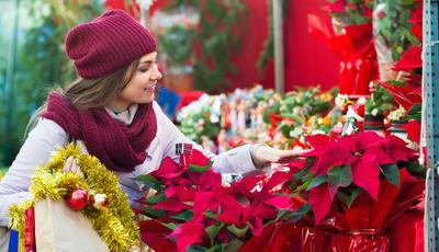 As flores que tornam o Natal (ainda) mais colorido
