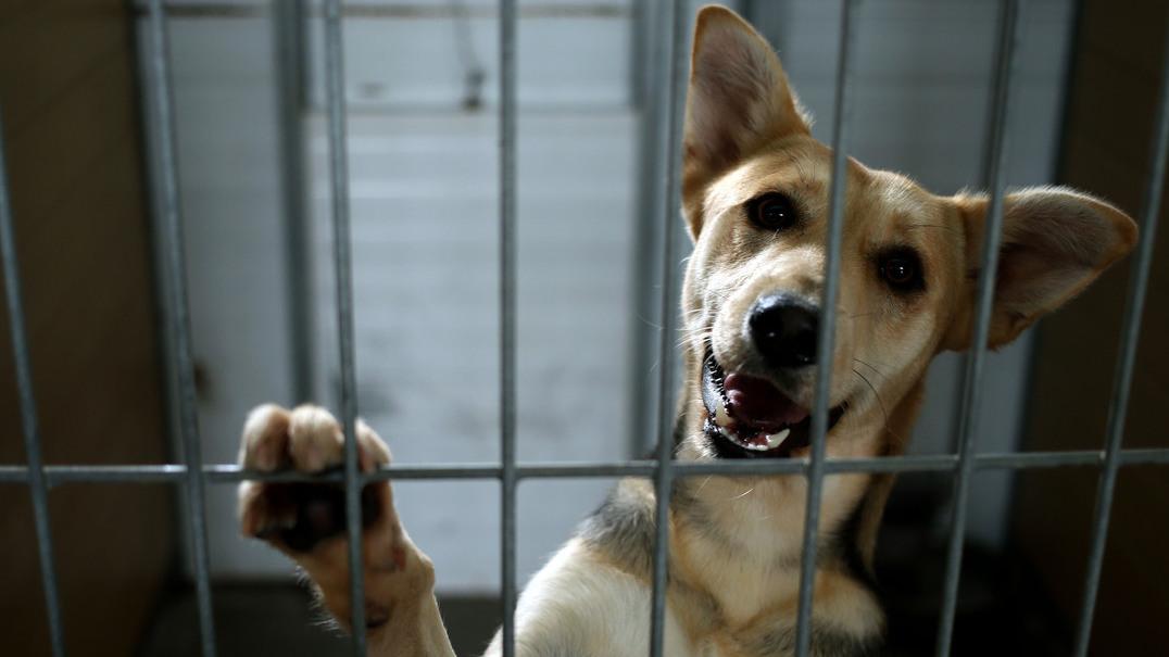 Mais de 33 mil animais foram abandonados em 2016
