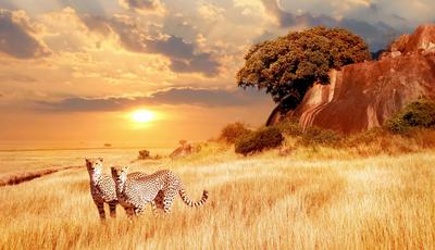 35 experiências únicas com as cores e os cheiros do continente africano