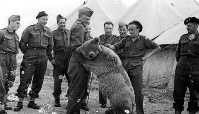 """O cabo Wojtek: história do famoso """"urso soldado"""" da Segunda Guerra Mundial chega ao cinema"""