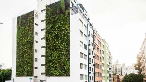 Como os jardins verticais estão a mudar São Paulo