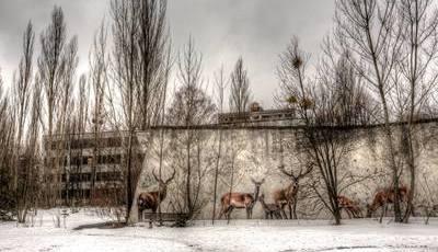 Todos querem conhecer (agora) Chernobyl, mas sabe o que irá encontrar atualmente?