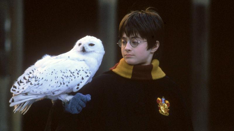 """""""Harry Potter"""": J.K. Rowling disse que não visitou a Lello. Os memes virais com Rui Bandeira, D. Afonso Henriques e companhia"""