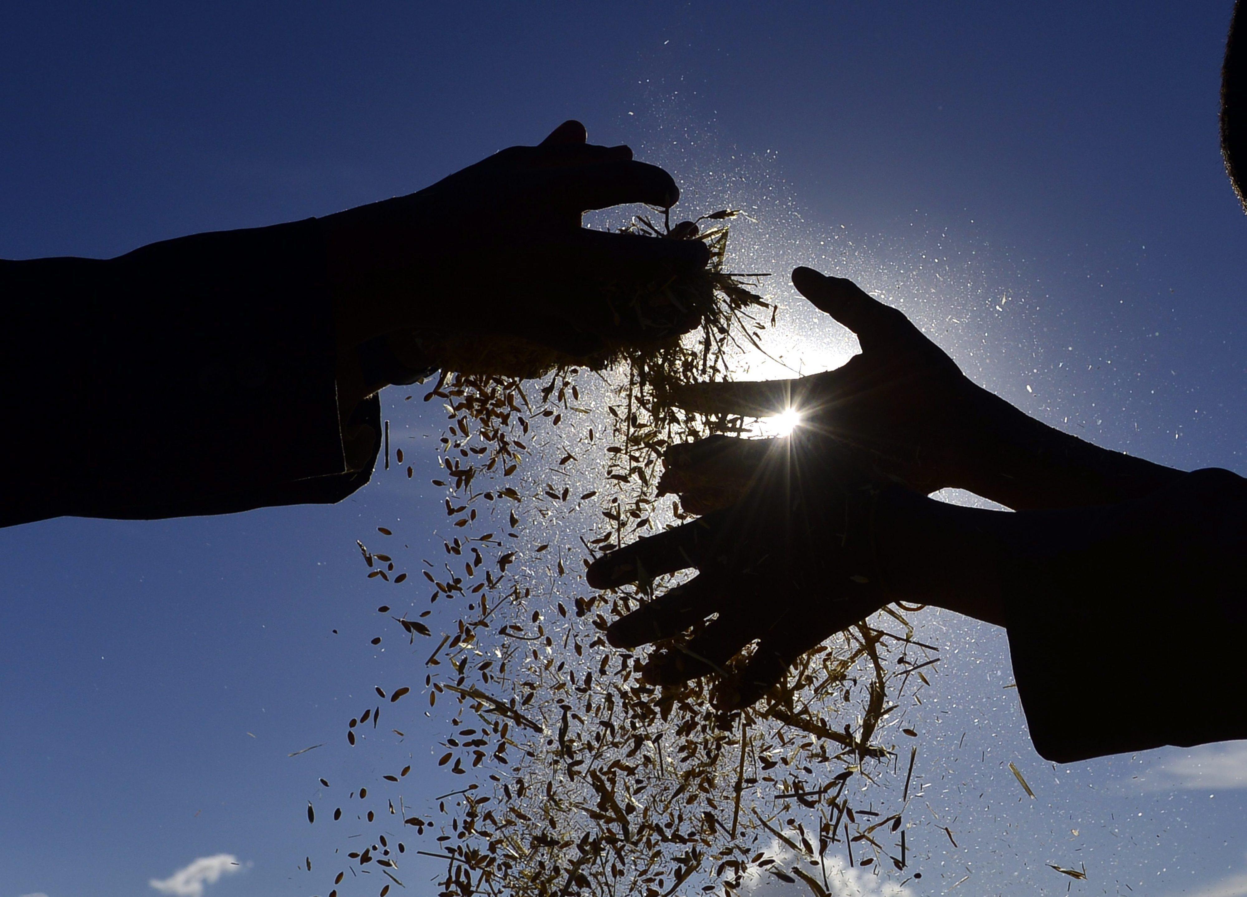 INE prevê aumento de 8% na produção de cereais de outono/inverno