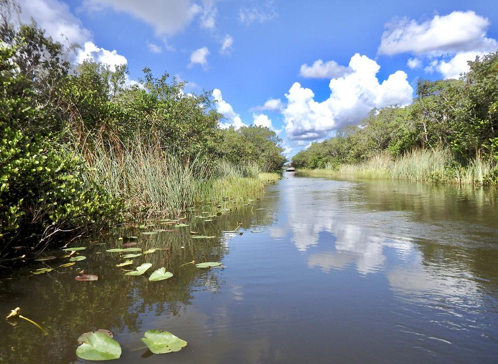 """Explorar Everglades: dos jacarés aos pássaros, sem esquecer o passeio de """"hovercraft"""""""