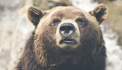 O delicado equilíbrio entre turismo e preservação nos parques do Canadá