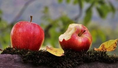 Como contribuir para reduzir o desperdício alimentar