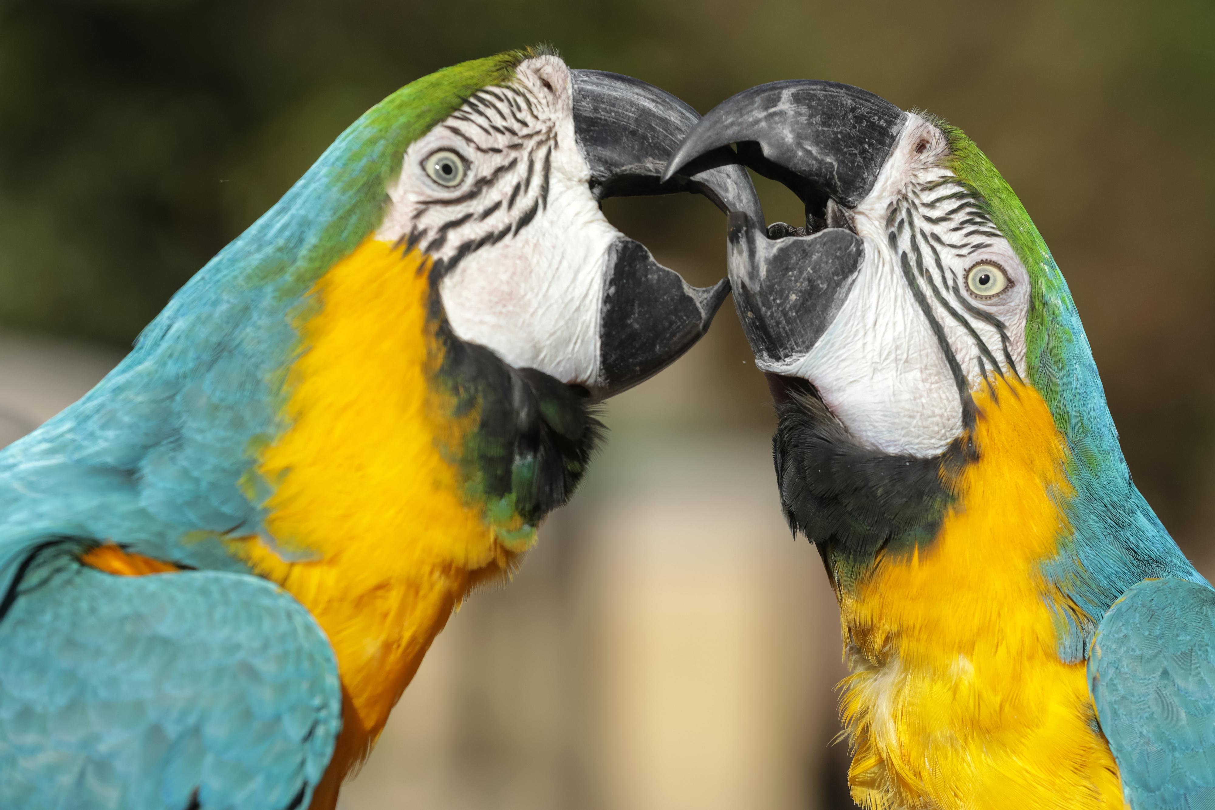 O seu destino era o tráfico, mas acabaram por nascer no Zoo de Lisboa. A história de Yeti e de outras aves exóticas