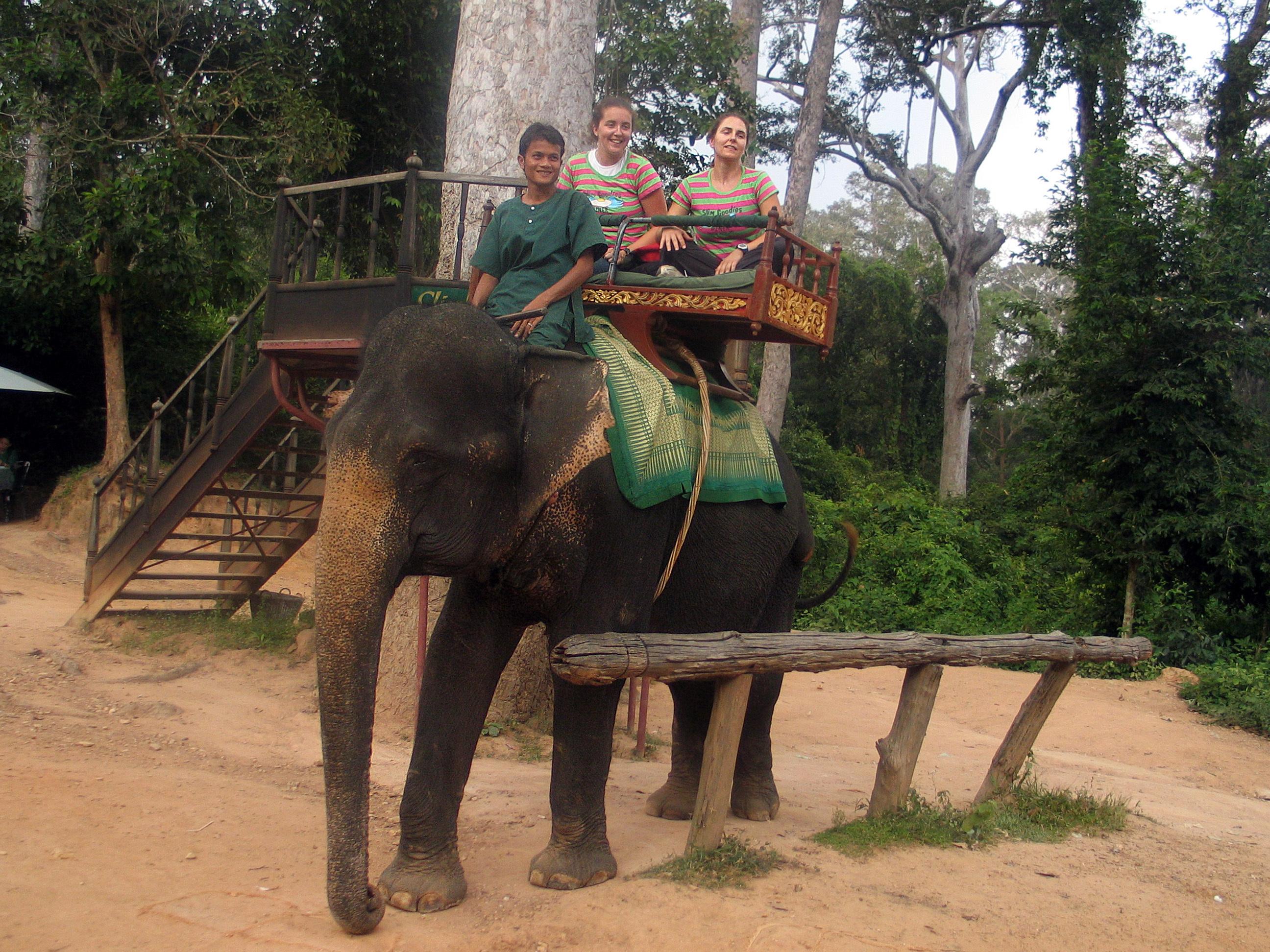 Camboja proíbe passeios de elefantes templo Angkor Wat