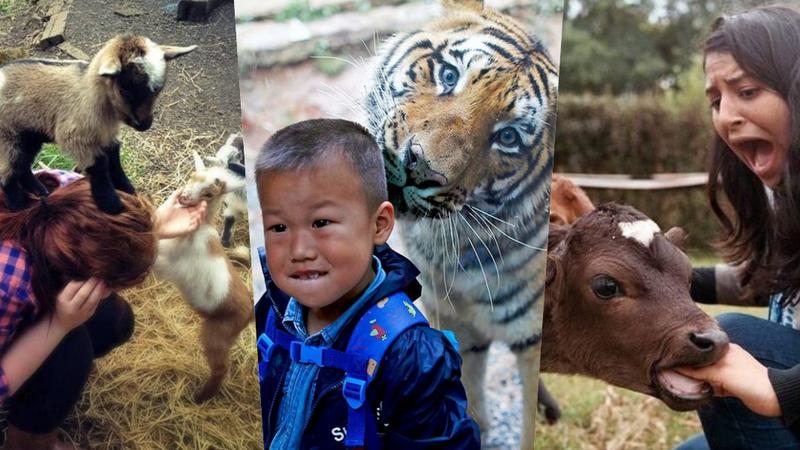 25 vezes que os turistas foram surpreendidos por animais