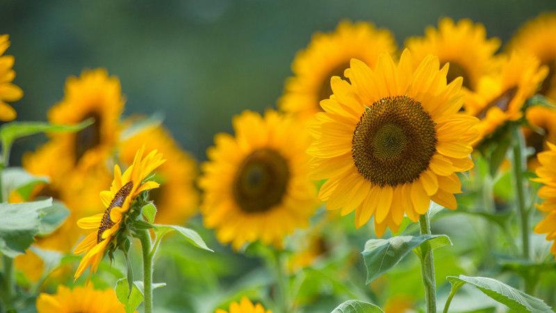 5 flores que deve plantar na primavera